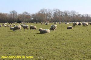 Recette Moutons du Kent et sauté d'agneau, wakamé et chou chinois