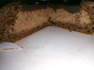 Recette Gâteau tout Nutella et sa mousse Nutella