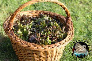 Recette Tout savoir sur les salades (pas à pas en photos)
