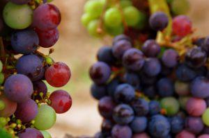 Recette Des femmes et du vin