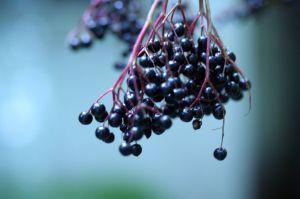 Recette Vinaigrette au sirop de sureau du Kamouraska