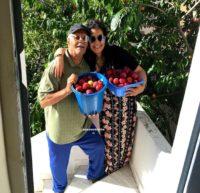 Recette VLOG famille, cueillette de prune et recette de confiture de prunes