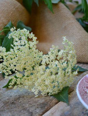 Recette Beignets de fleurs de sureau