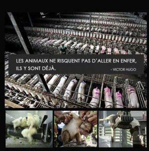 Recette Pourquoi vegan ?