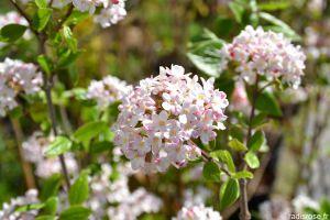 Recette Fête des plantes de printemps à Saint Jean de Beauregard