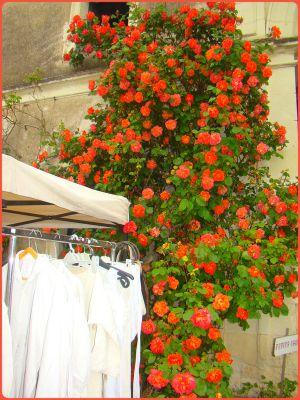 Recette Palette de couleurs... et de fleurs