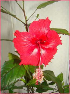 Recette Des fleurs, de la couleur