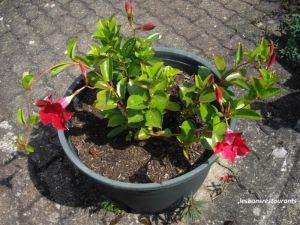 Recette Notre jardin côté fleurs