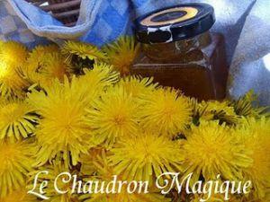 Recette Aujourd'hui ce n'est pas raviolis, c'est miel de pissenlits; et c'est gratuit