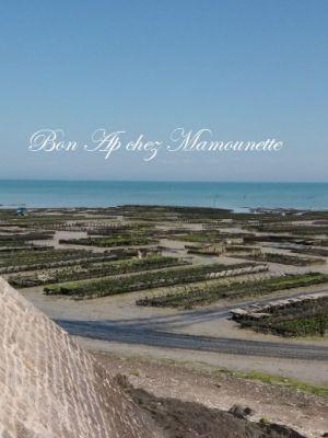 Recette Huîtres des parcs de Cancale 35 et Araignée de mer de la côte bretonne, bonne fête des papas pour dimanche