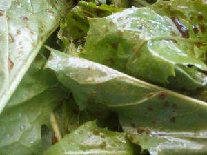 Recette Salade de pissenlit au magret de canard, fromage bleu, croûtons, noix
