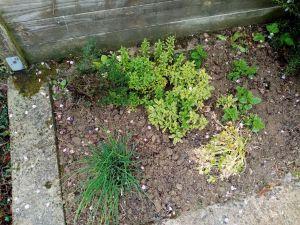 Recette Peu de jardinage