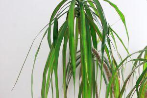 Recette 5 plantes pour mettre du vert dans votre intérieur