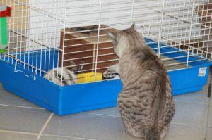 Recette Chat et le lapin