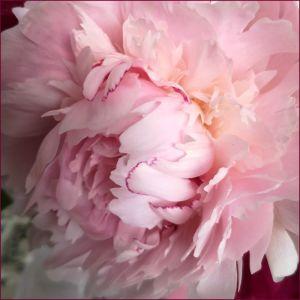 Recette Mes fleurs du dimanche