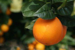 Recette Orange - Féve Tonka