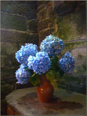 Recette Des fleurs de fin d'été