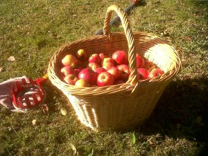 Recette Tarte pommes-poires
