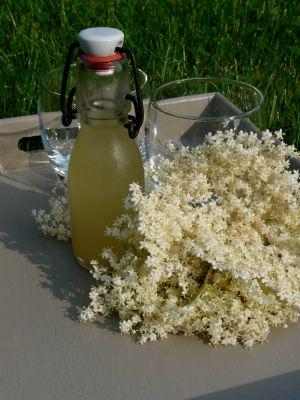 Recette Fleurs de sureau pour parfumer une panna cotta et son granité et du sirop à savourer toute l'année