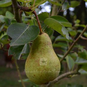 Recette Confiture de poires à la badiane et armagnac