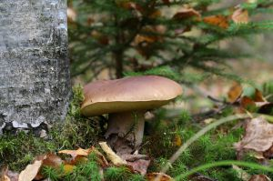 Recette Produit de saison : le champignon