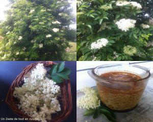 Recette Flan à  l'infusion de fleurs de sureau