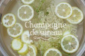 Recette Champagne de sureau