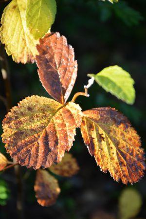 Recette Couleurs d'automne dans le Vercors