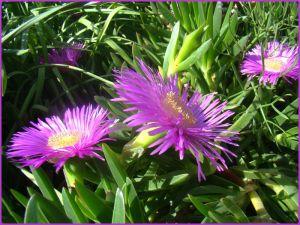Recette De la couleur... des fleurs