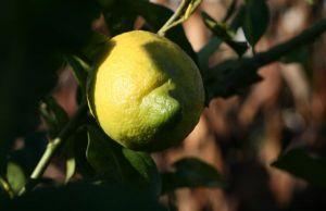 Recette Datte au citron