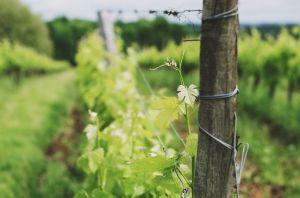 Recette Vin en Biodynamie Bordeaux : Le Château Pré la Lande