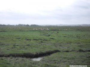 Recette Crotoy(80)-Les moutons de la Baie de Somme