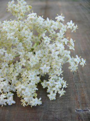 Recette Vin de fleurs de sureau