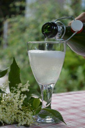 Recette Champagne de fleurs de sureau
