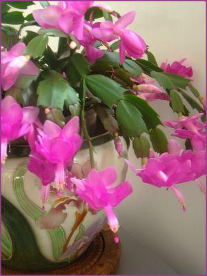 Recette Couleurs... fleurs