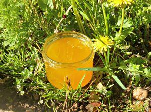 Recette Gelée de pissenlits appelé aussi Cramaillotte ou Miel de pissenlits