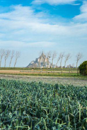 Recette Tout savoir sur le Poireau de Normandie