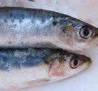 Recette Tartine au saumon fumé, radis rose et concombre